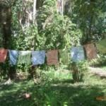 SevGen 'Intention Flags'