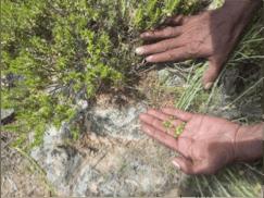 effects_traditional healing_Rod-Mason-Hands